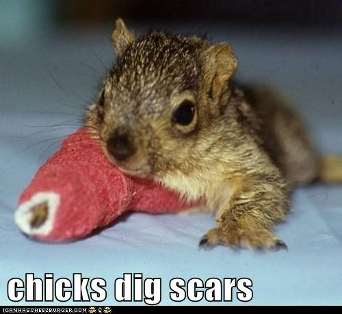 best of the week broken arm cast Hall of Fame hurt rebel scars squirrel - 5832343040