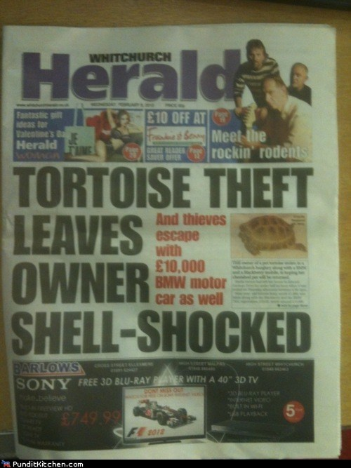 headlines,newspapers,political pictures,puns,tortoise
