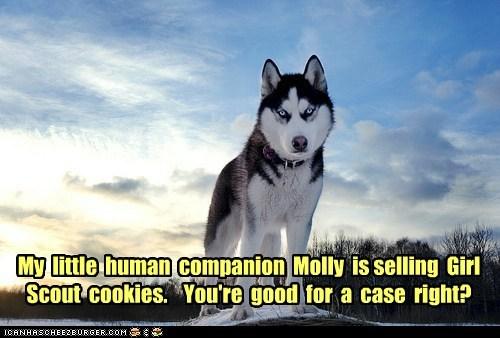 cookies husky intimidating - 5832384768