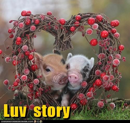best of the week Hall of Fame love love story pig - 5832787968