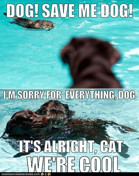 aww,best of the week,caption,captioned,dogs,forgiven,friends,goggies,Interspecies Love,pool,pools,sorry,swim,swimming