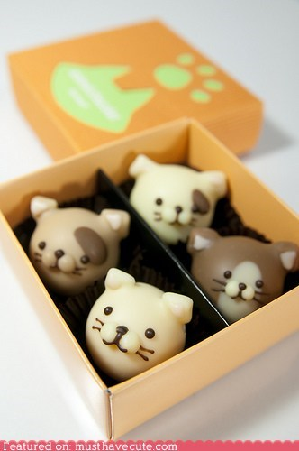 bon bons box Cats chocolate epicute face smile Truffles