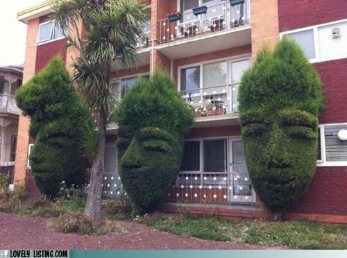 apartment,bushes,condo,shrubs,toiary,yard