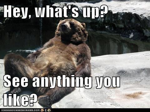 bears flirting hey baby sexy - 5834220544