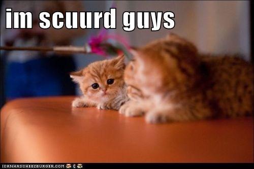 caption captioned cat Cats kitten scared tabbies tabby - 5834391552
