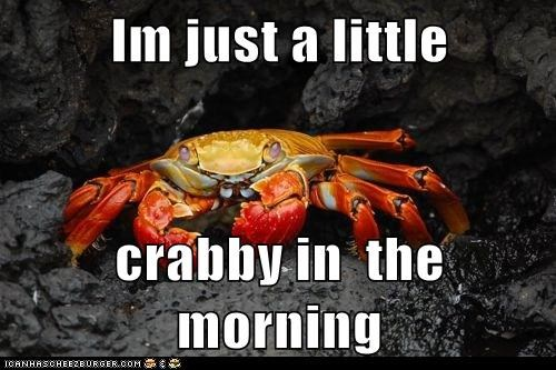 crab,crabby,morning