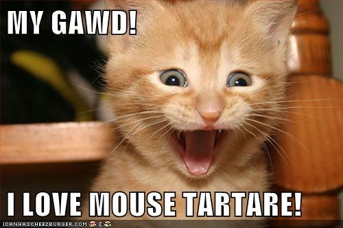 caption captioned cat do want kitten love mouse noms tartar - 5834911488