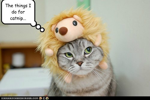 caption,captioned,cat,catnip,costume,desperate,do,dressed up,hedgehog,stuffed animal,things