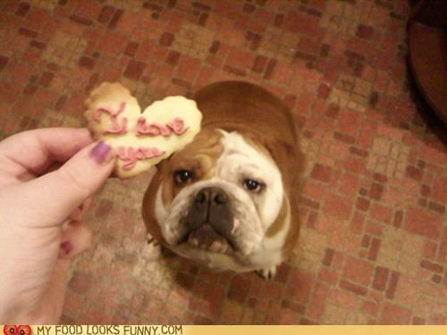cookies dogs heart love snack