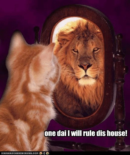 caption captioned cat do want dream hoping kitten lion mirror one day tabby - 5835482368