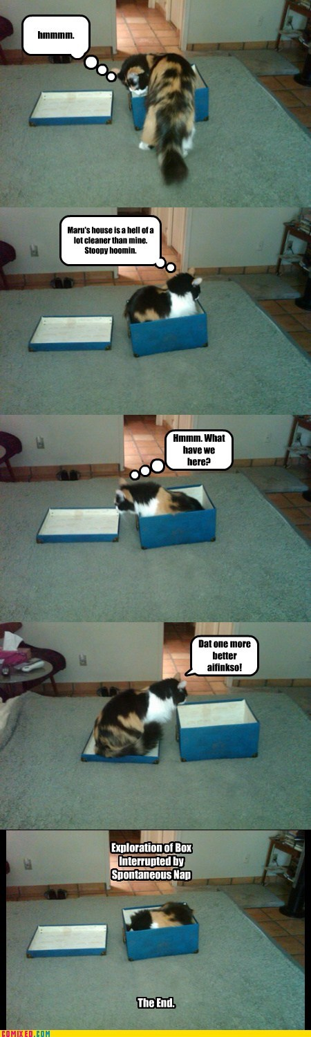 box caption captioned cat exploring interrupted nap spontaneous - 5835584512