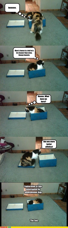 box caption captioned cat exploring interrupted nap spontaneous - 5835584512