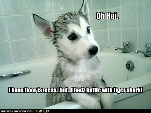 bath,bath time,husky,shark,tiger shark,water,wet