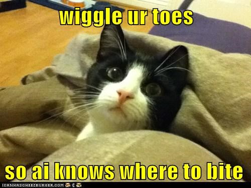 best of the week bite caption captioned cat know location reason toes where - 5836074240