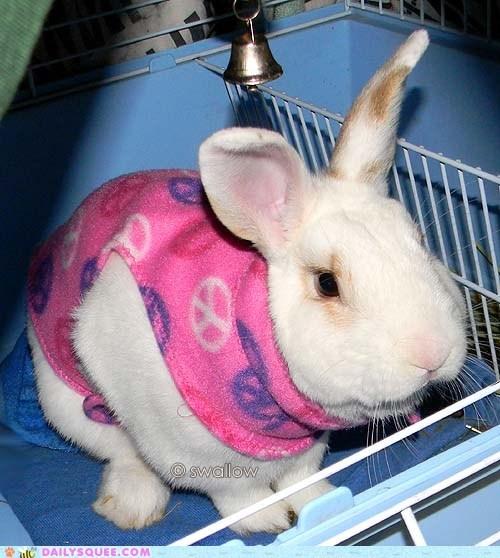bunny pet rabbit reader squees taco - 5836128256