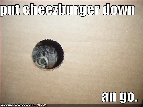 Cheezburger Image 583639296
