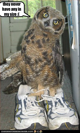 bird,birds,caption,disappointed,Owl,owls,shoe size,shoes,sizes,too big
