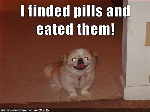 crazy,crazy pills,medication,medicine,pills,shih tzu,smile,smiling,trippin