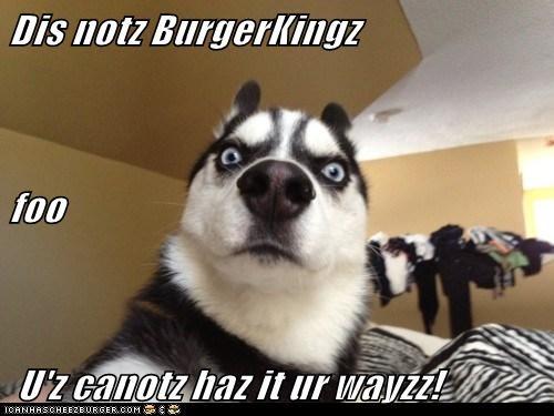 Cheezburger Image 5837454336
