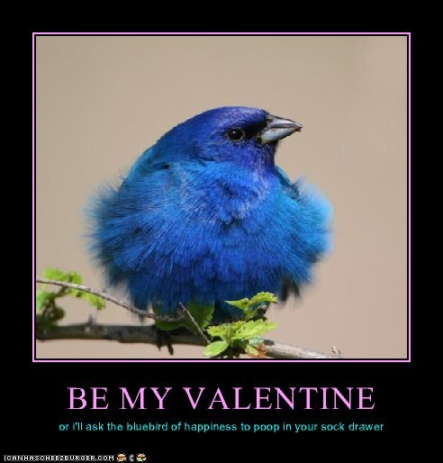 BE MY VALENTINE or i'll ask the bluebird of happiness to poop in your sock drawer