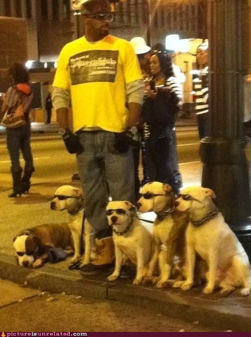 dogs sunglasses at night wtf - 5837842176