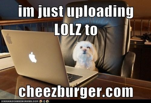 Cheezburger Image 5839215104