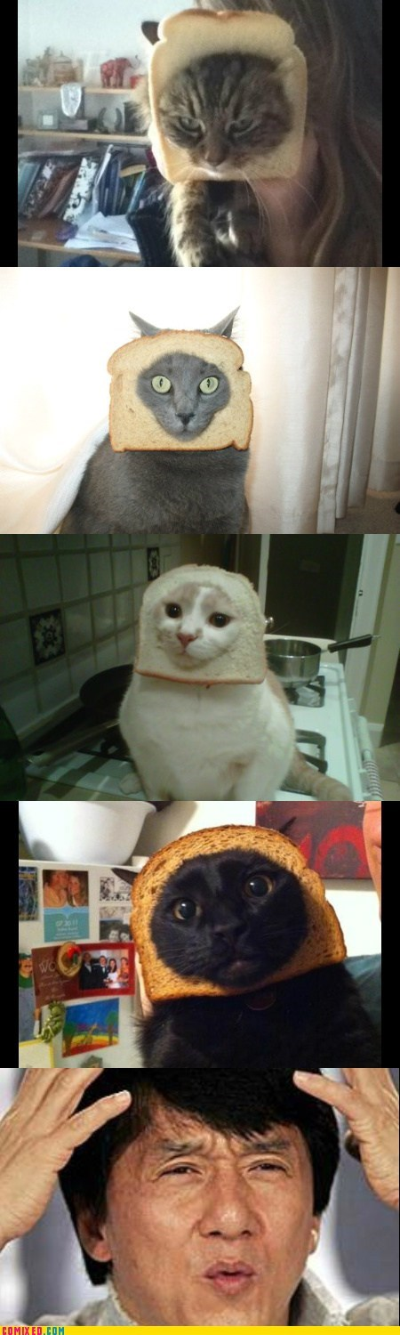 animals breading Cats Jackie Chan meme wtf - 5839243520