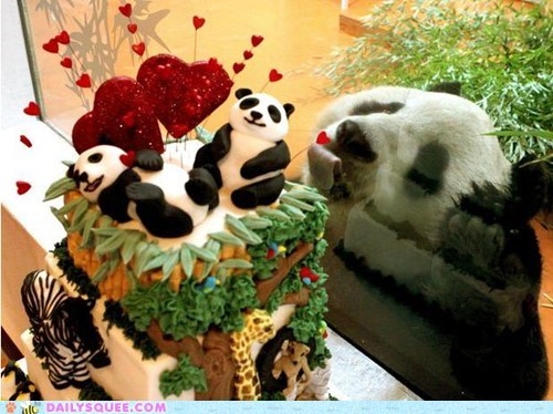 cake food Hall of Fame lick panda tongue window zoo - 5839554560