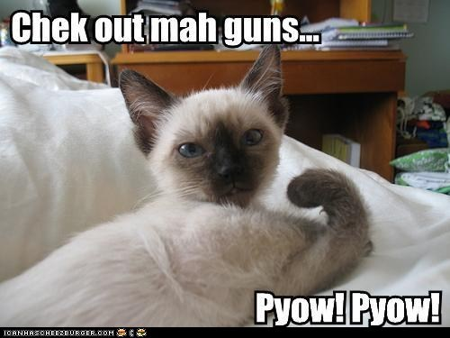 best of the week caption captioned cat check out flexing guns kitten muscles pow showing off slang sound - 5839606528