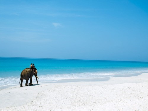 beach,elephant,getaways,ocean,riding and elephant,Tropical,unknown location