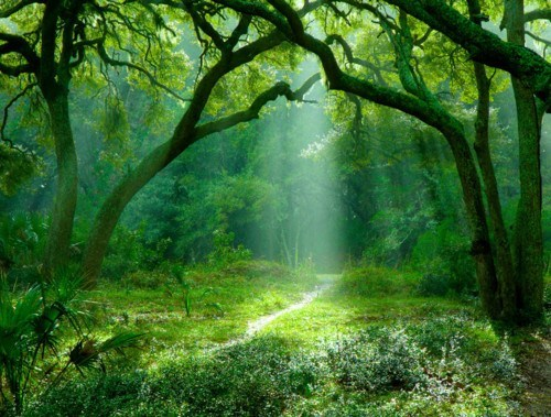 Forest,getaways,green,moss,sunbreak,sunbreaks,trees,unknown location