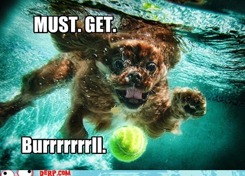 ball best of week derp goggie swimming - 5840110592
