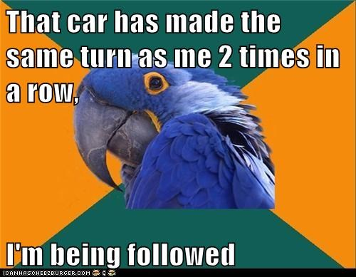 birds,cars,followed,paranoid,Paranoid Parrot,parrots,turns