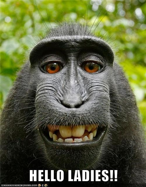 ape,hello ladies,monkey,teeth