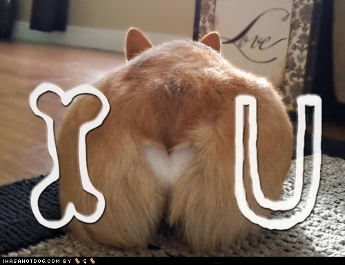 butt,corgi,i love you,Valentines day,dogs