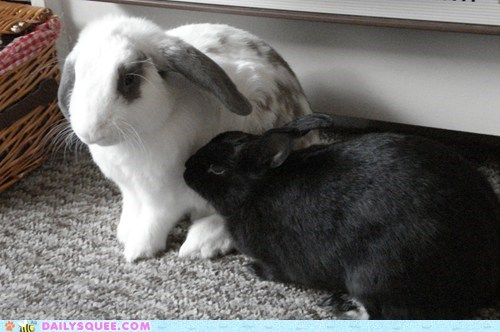 bunnies bunny cuddling grooming happy bunday love rabbit rabbits reader squees - 5840633088