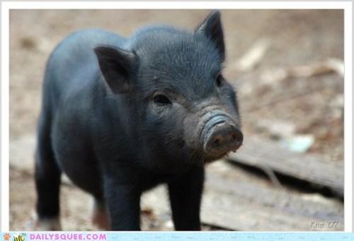 baby Hall of Fame little nursery rhyme pig piglet - 5840658688