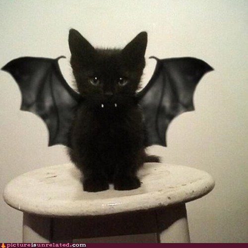 best of week cute lol cats vampire wtf - 5840705792