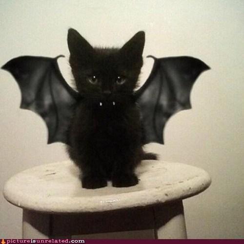 best of week cute vampire wtf - 5840705792