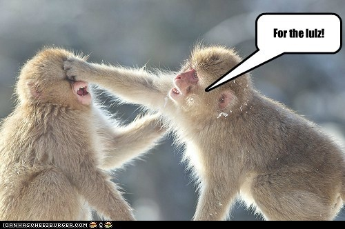 because of reasons caption For The Lulz lol lulz mean monkey monkeys ouch punch punching slap smack