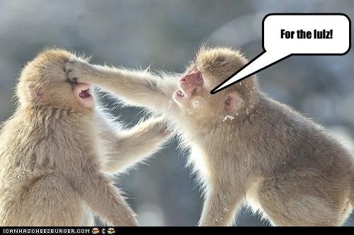 caption lol mean monkey monkeys ouch punch punching slap smack - 5841356800