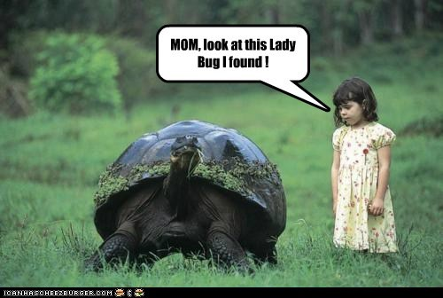 child,human,kid,lady bug,tortoise,turtle,whoa
