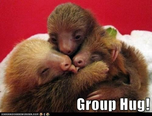 adorable,group hug,hug,sloth,sloths