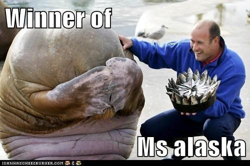 awesome,beauty pageant,happy,ms-alaska,proud,walrus
