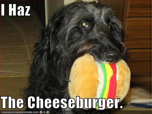 Cheezburger Image 584259840