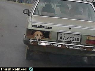 animals,cars,dogs,tail light
