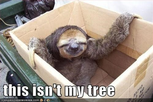 best of the week box Hall of Fame happy sloth sloth this-isnt-my this-isnt-my-tree tree