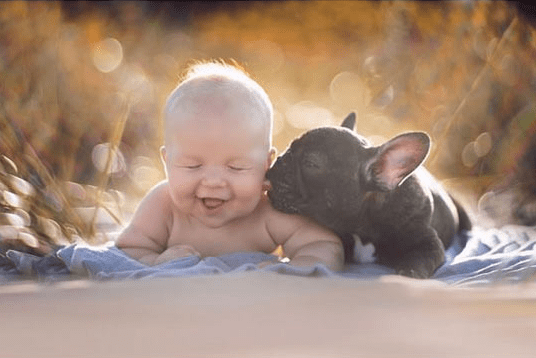 aww friendship dogs baby bulldog cute brothers - 5843205