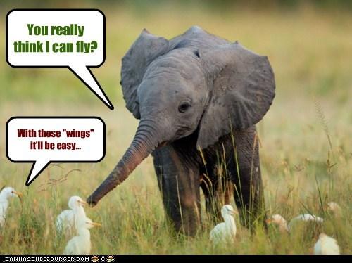 baby elephant birds conversation dumbo ears elephant fly flying friends interspecies friendship - 5843619072