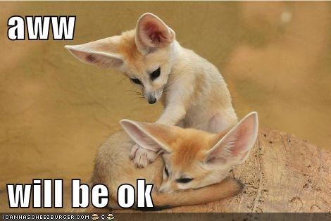 fennec fox,fennec foxes,friendship,im here for you,it will be ok,love